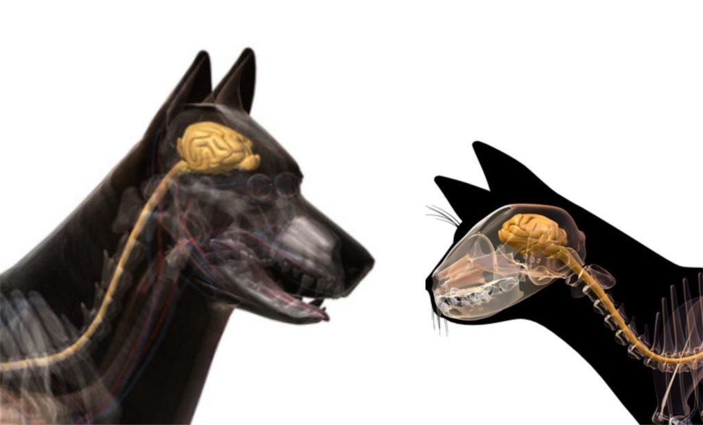 ветеринарная неврология. нервная система кота и собаки