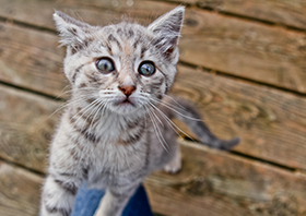 news_cat