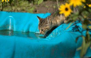 жажда у кота
