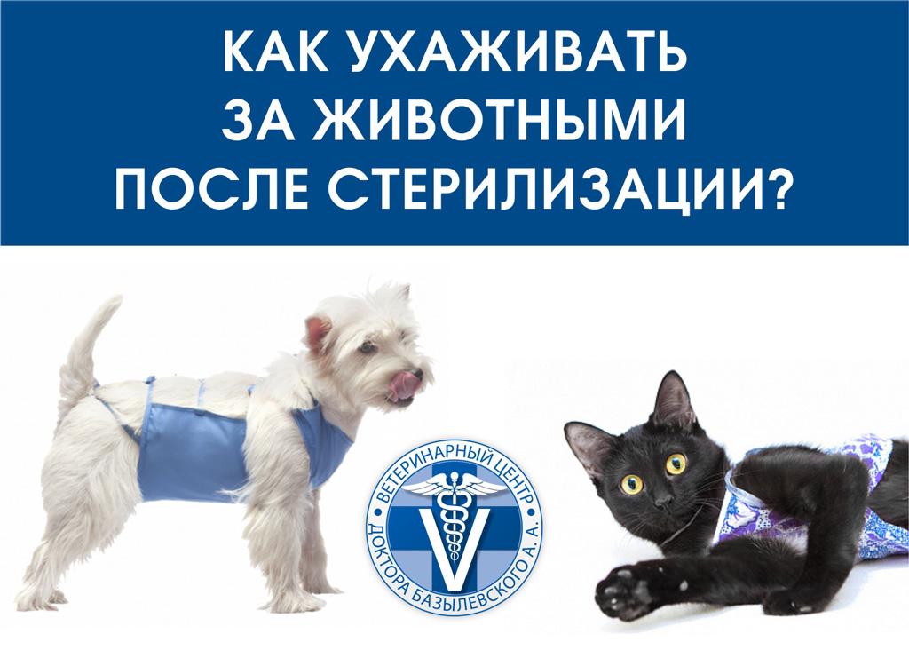 уход за животными после стерилизации или кастрации