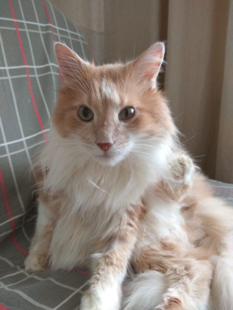 Синдром Горнера на фоне СД у кота