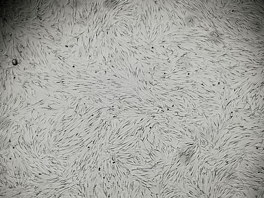 Готовые клетки в физиологическом растворе