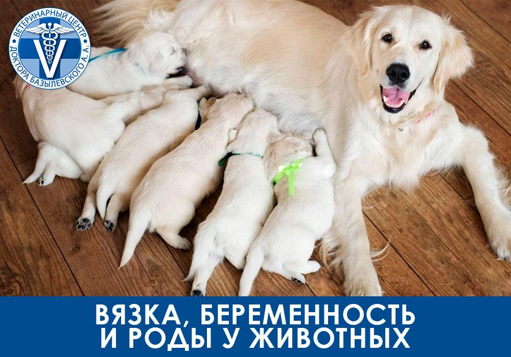 Вязка, беременность и роды у животных. Подробная информация