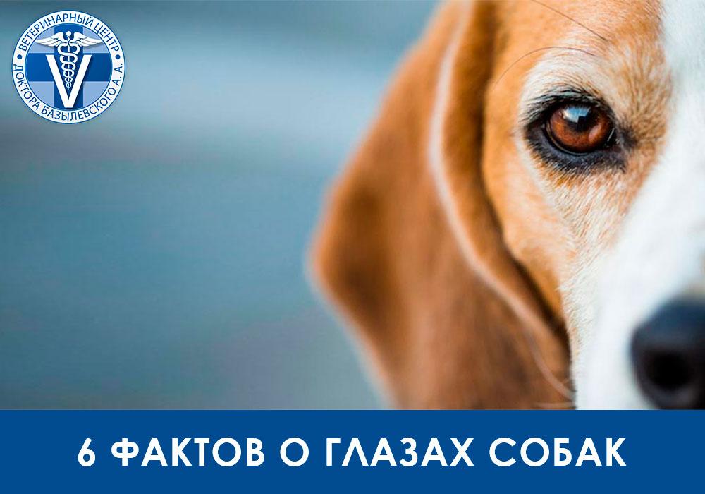 6 фактов о глазах собаки