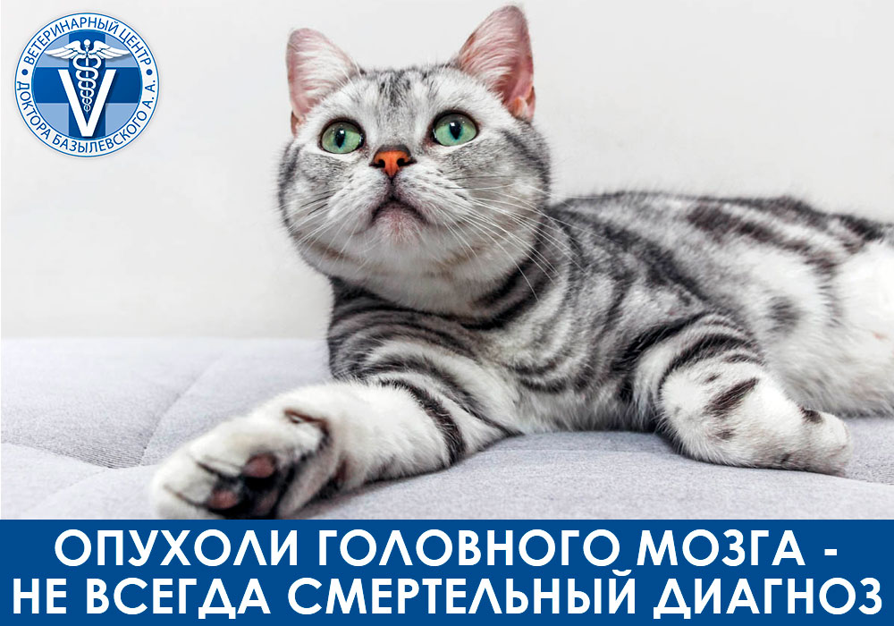 Опухоли головного мозга у кошек